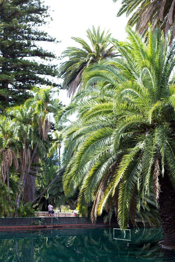 Perth zoo2