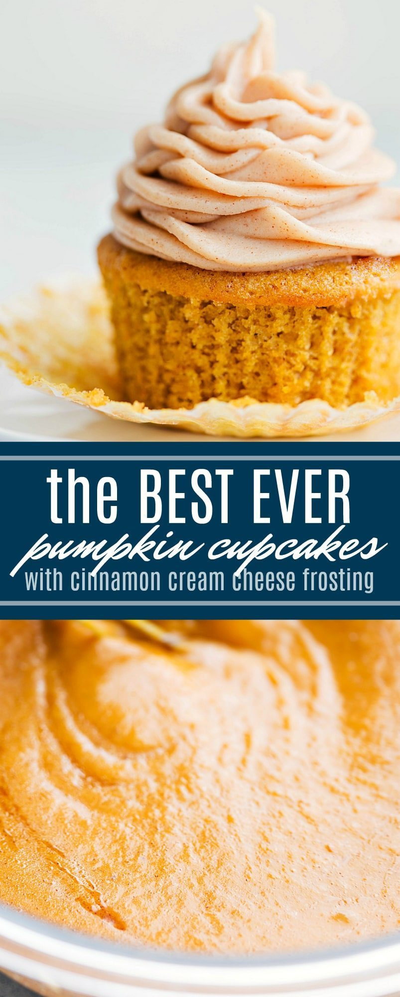 The ultimate BEST EVER pumpkin cupcakes with a cinnamon cream cheese frosting. Everyone goes crazy for these cupcakes! via chelseasmessyapron.com