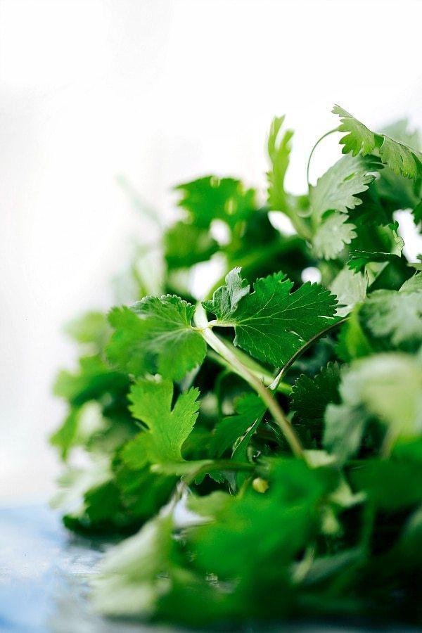Easy, healthy, and SO delicious Mexican flavor inspired Avocado Chicken Salad! via chelseasmessyapron.com #healthy #salad #chicken #quick #easy #kidfriendly #avocado #tomato #cilantro #lime #cleaneating #keto #health #salad #blackbeans #recipe
