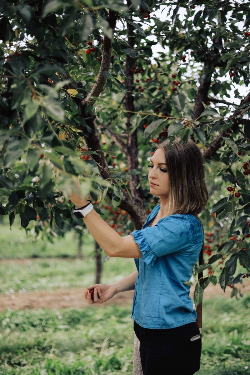 Image of Chelsea picking fresh cherries